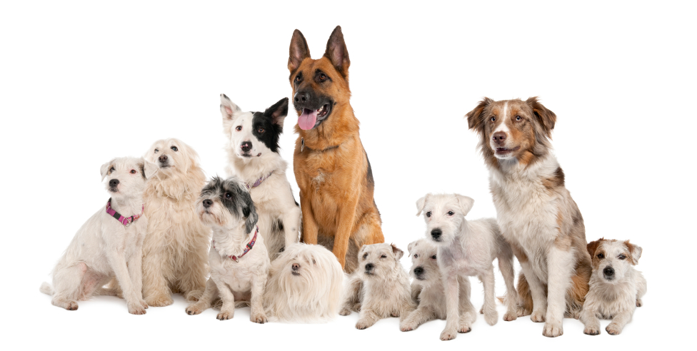 Image Result For Dog Training Classes Seattle