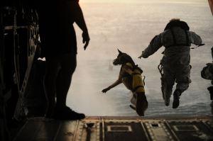 armyparatrooperdog