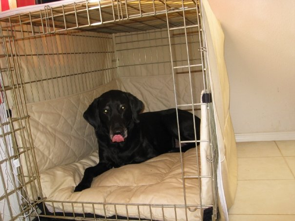 luxury dog crates