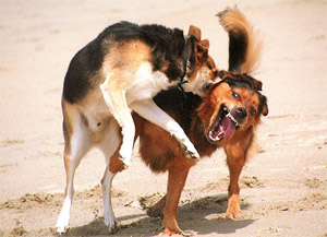 dogs fight bit dogpark